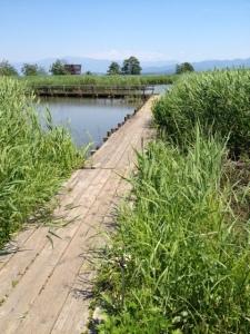 Fukushimagata Wetlands, near Niigata. This is a beautiful area to visit!